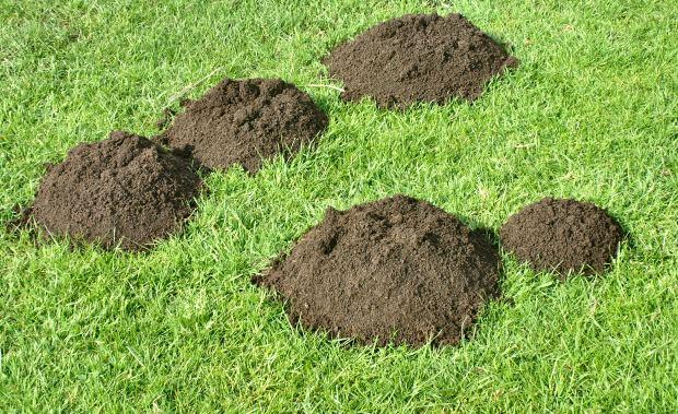 ako sa zbavit krtka v zahrade